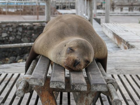seal sleeping